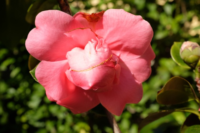 En stor blomst