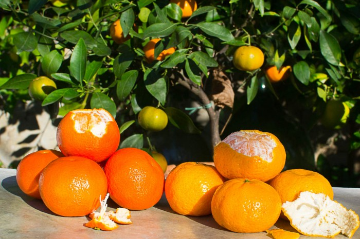 Mandariner og clementiner