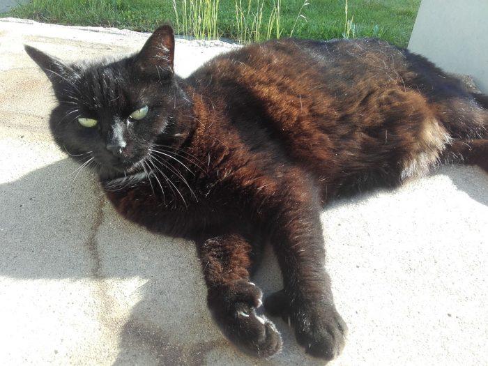 20170527_183345-katten